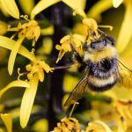 Icelandic Beekeepers Concerned About Pesticides