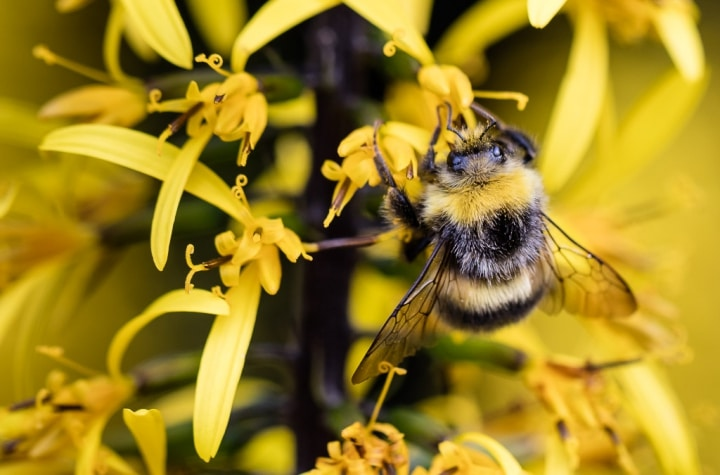 Icelandic Bees on 'Road to Recovery'