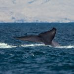 Environmental Association Calls to Redo Whaling Report