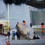 Conservationists Sue Whaling Company