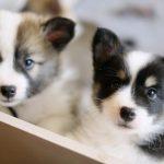 Risk Assessment Finds Four-Month Pet Quarantine Unnecessary