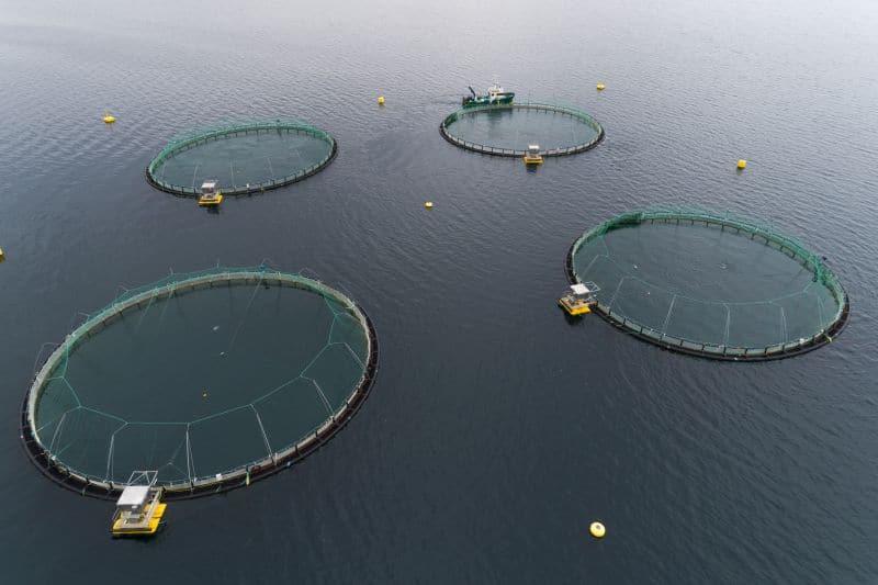 IPN Virus Detected in East Iceland Fish Farm