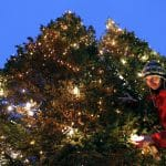 Akureyri Local Astounded by Dated Christmas Tree Tradition