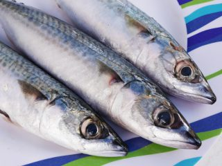 Mackerel War On the Cards As Iceland Increases Quota?