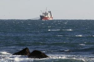 Samherji ship fishing capelin
