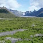 birch forest skeiðarársandur birkiskógur